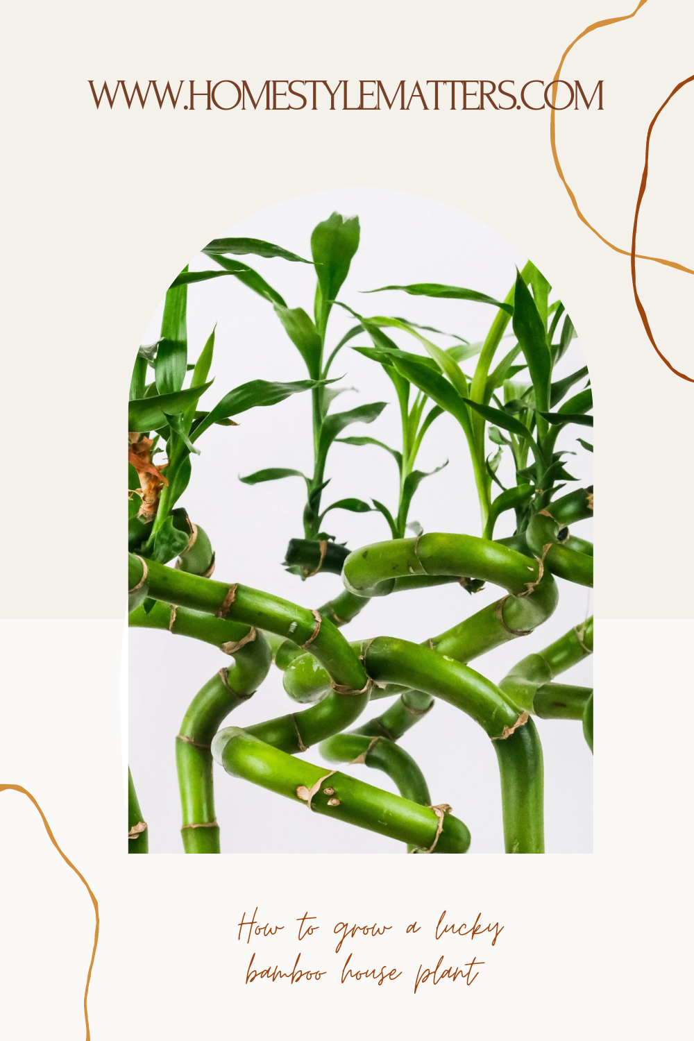 How to grow a lucky bamboo house plant 1