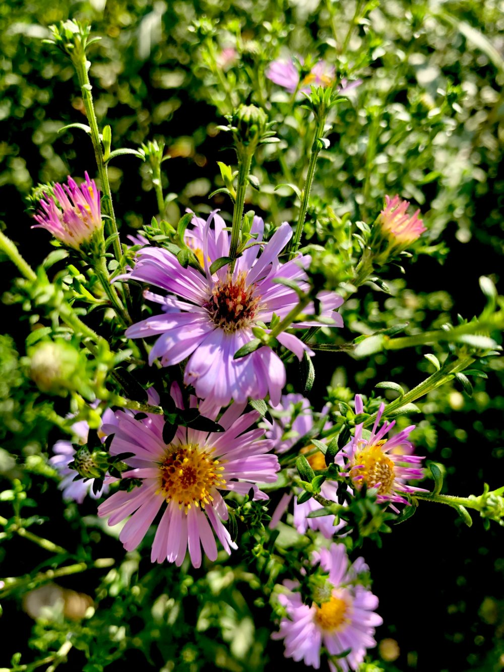 3 Perennials You Should Have in your Garden this Autumn 2