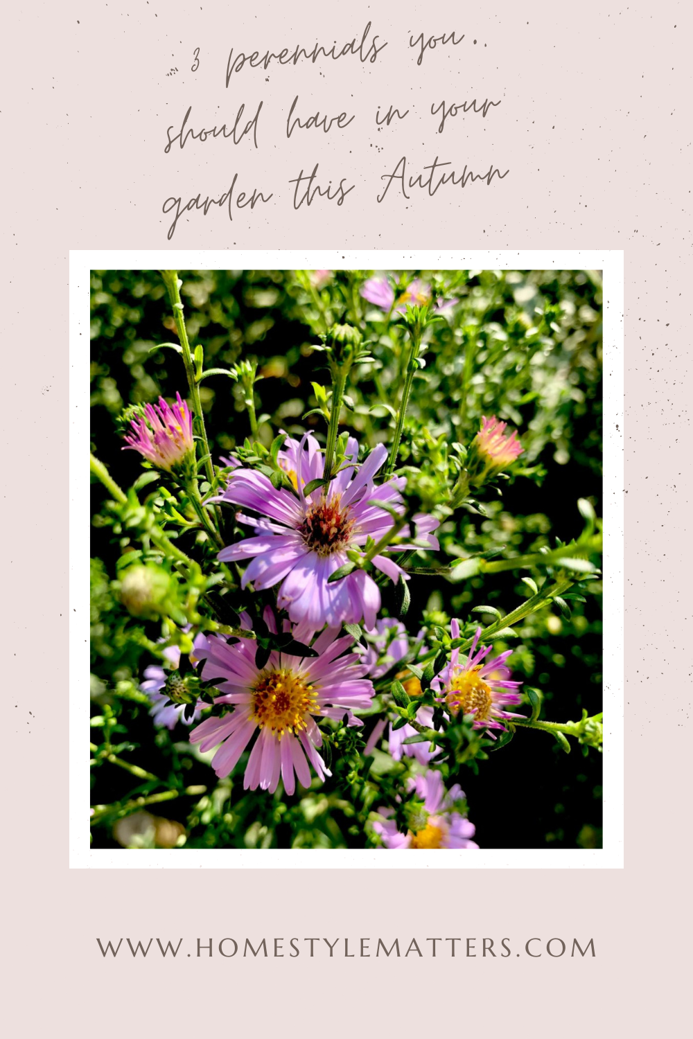 3 Perennials You Should Have in your Garden this Autumn 3